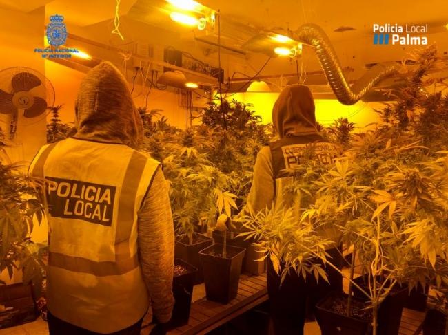 Policía Nacional y Policía Local de Palma desmantelan un punto de venta de droga