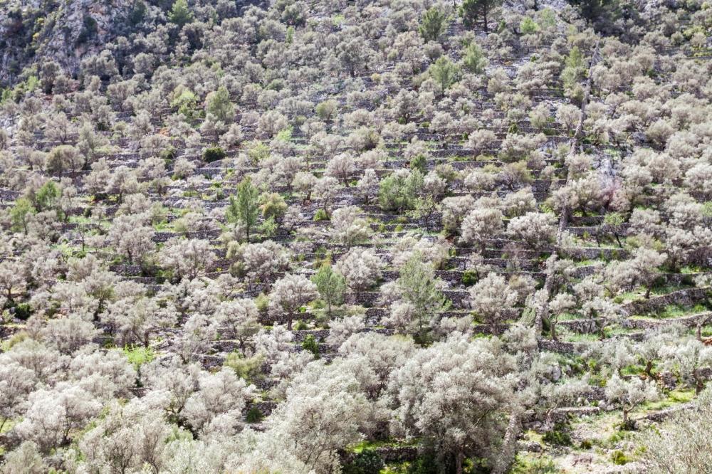 El Consorci Serra de Tramontana dará a conocer los productos locales de la Serra para salir de la crisis