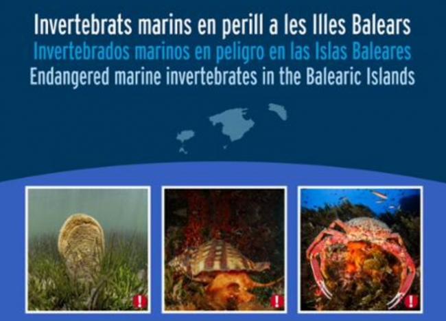 Medio Ambiente pide la colaboración ciudadana para detectar invertebrados marinos en peligro