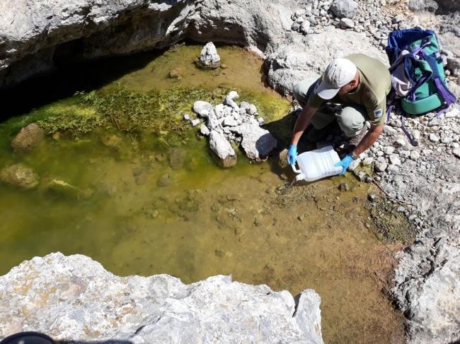 Medio Ambiente libera 647 larvas de ferreret en la Serra de Tramuntana