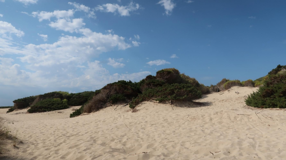Los espacios naturales protegidos de las Baleares retoman las actividades educativas