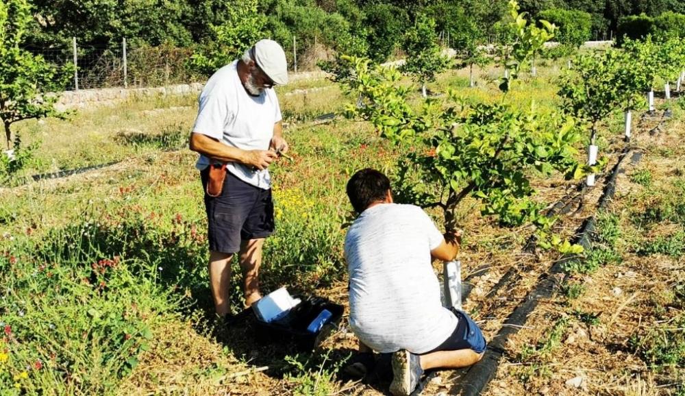 Govern autoriza la elaboración de la primera estrategia Balear de mejora del conocimiento agrario