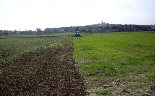 El FOGAIBA abona más de 2,7 millones de euros en ayudas al sector agrario