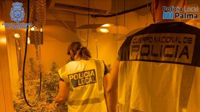 La Policía Nacional desmantela una plantación de marihuana y un punto de transformación y adulteración de cocaína