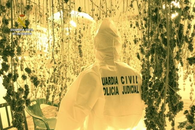 """La Guardia Civil desmantela una plantación """"Indoor"""" de más de 500 plantas de marihuana en Sineu"""