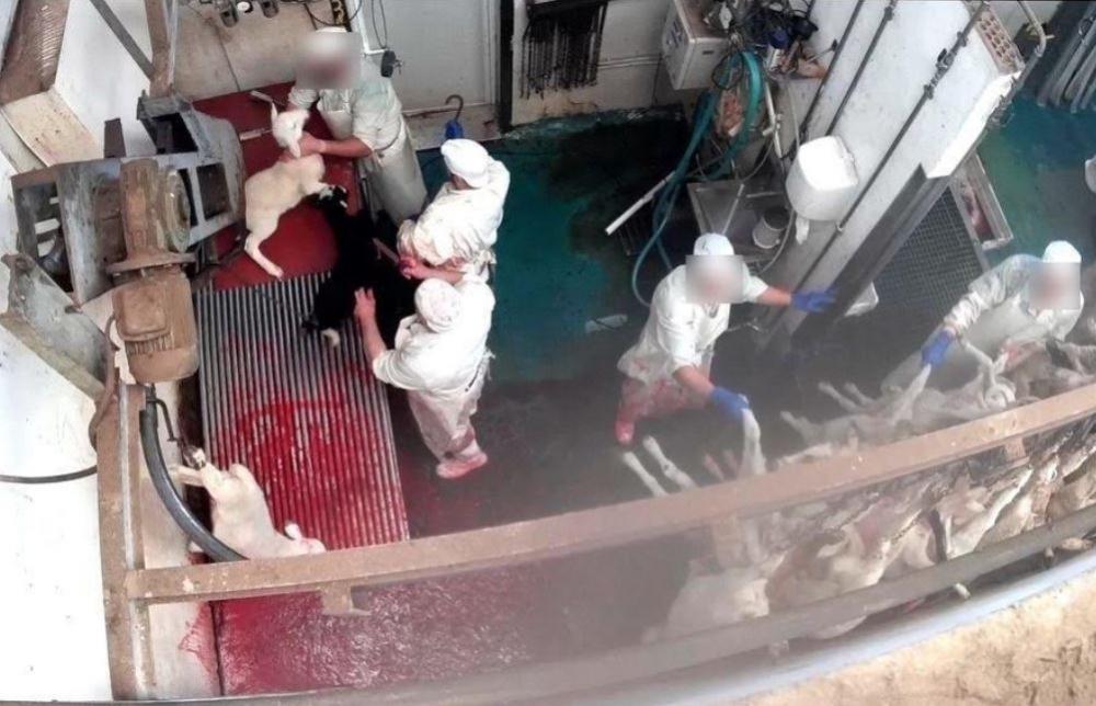 El Parlament de las Islas Baleares insta al Gobierno de la comunidad a instalar cámaras de vigilancia en mataderos