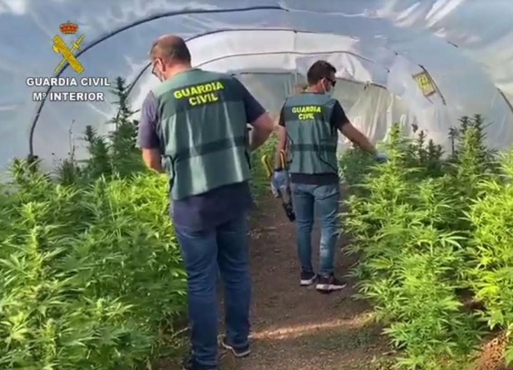 La Guardia Civil desmantela una plantación de 'marihuana' en una finca rural entre Manacor y Sant Llorenç