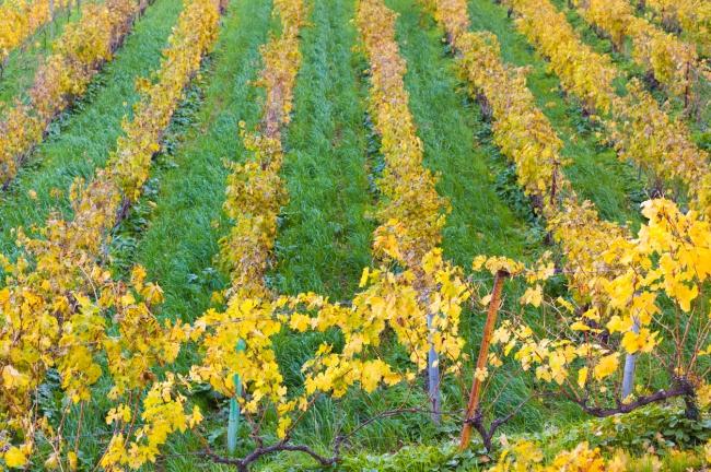 La UIB dispondrá de un campo agrícola experimental para actividades prácticas de jardinería y horticultura