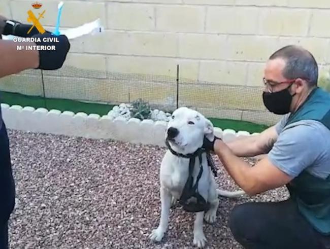 La Guardia Civil esclarece a través del ADN el robo de una camada de perros
