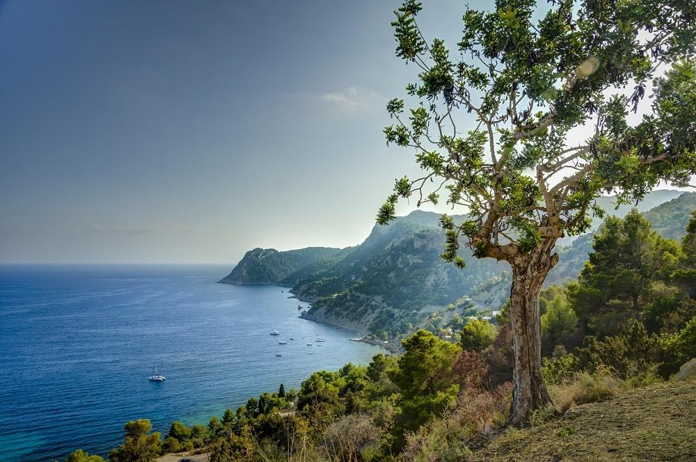 La Serra Grossa en Eivissa se declara zona de especial de conservación (ZEC)