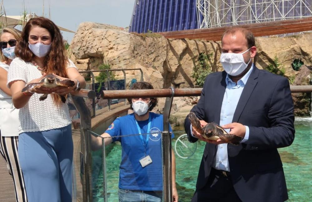 18 de las tortugas marinas nacidas en Eivissa el verano pasado evolucionan favorablemente en el Oceanogràfic de València
