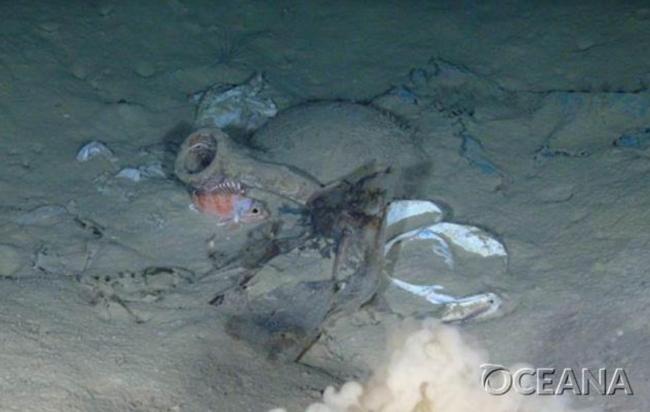 Oceana revela una plaga de plásticos en las profundidades marinas de Europa