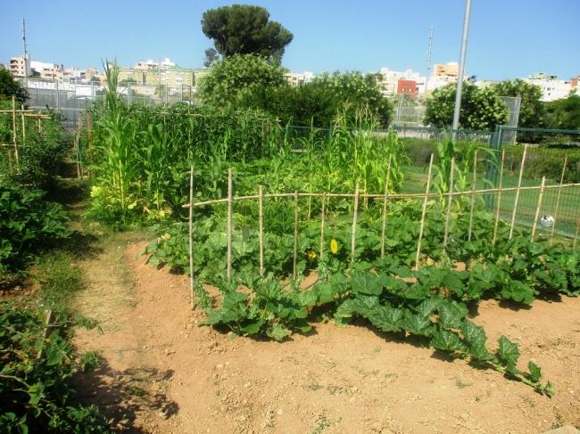 Palma sorteará las parcelas y mesas de cultivo de la Red de Huertos Urbanos