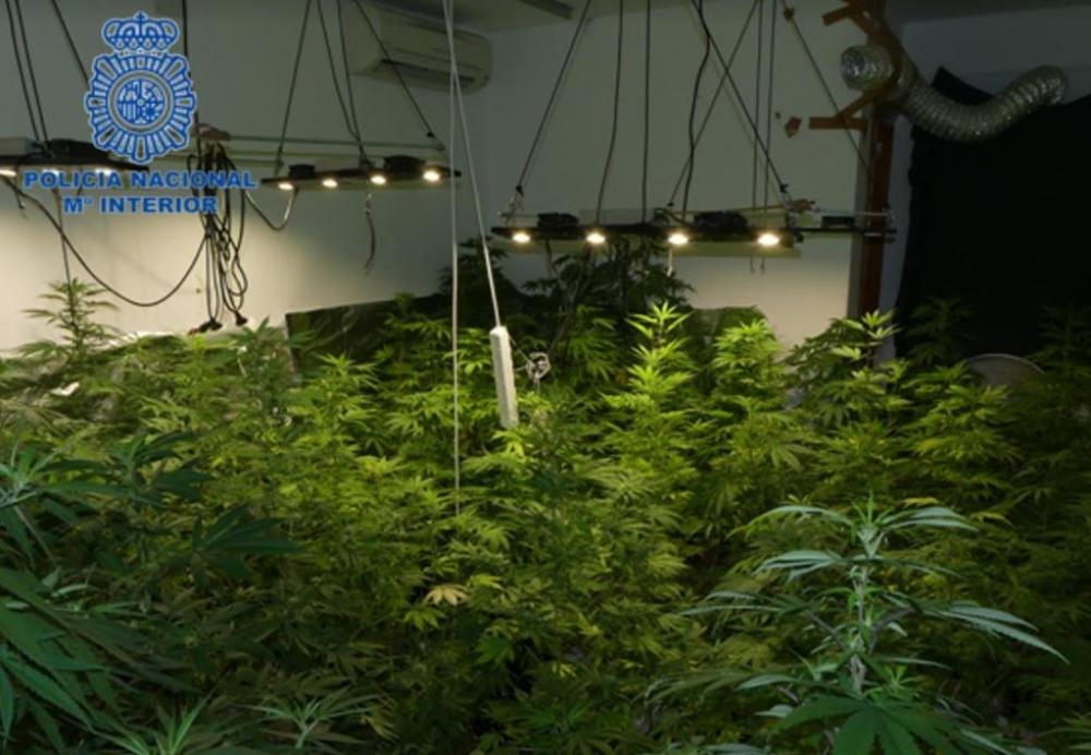 La Policía Nacional detiene a un hombre con una plantación de marihuana en su domicilio