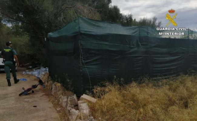 La Guardia Civil desmantela otra plantación de marihuana en Portocolom