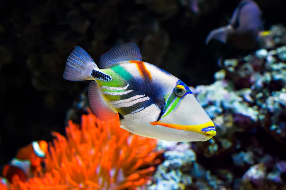 Palma Aquarium obtiene obtiene el certificado 'Safe Tourism'