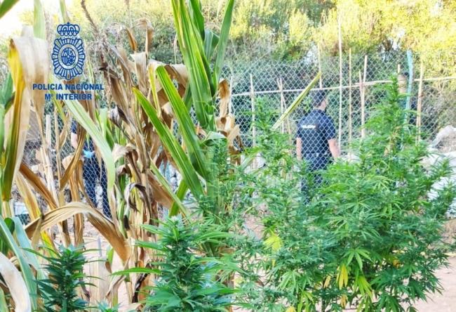 La Policía Nacional detiene a dos personas por un delito contra el tráfico de drogas