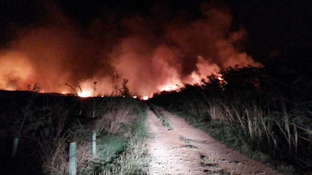 Un gran incendio en el Parc Natural de s'Albufera