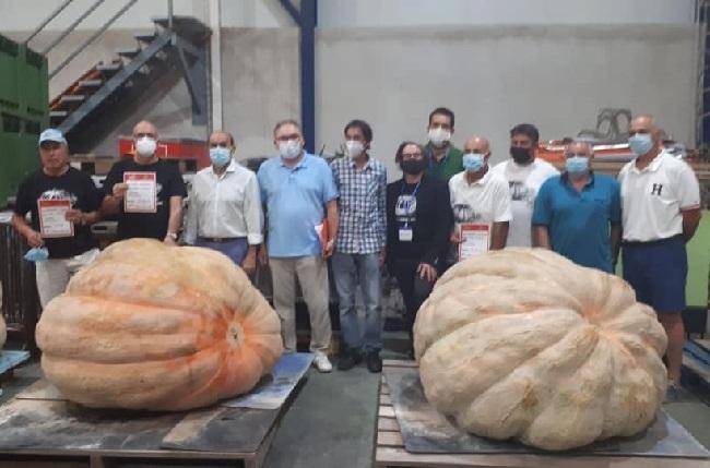 Una calabaza de 526 kilos gana en el concurso de Muro