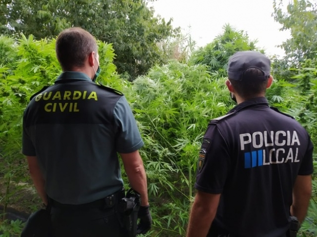 La Guardia Civil y la Policía Local de Lloret de Vistalegre intervienen una plantación de marihuana