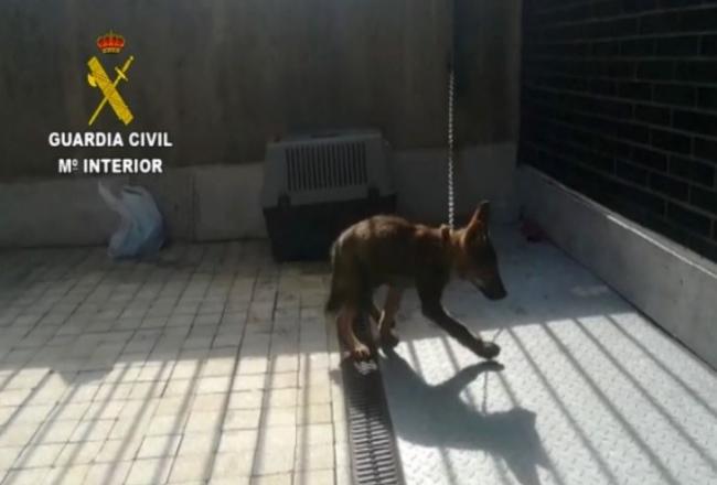 La Guardia Civil realiza más de 24.000 actuaciones relacionadas con la protección animal durante el primer semestre del año