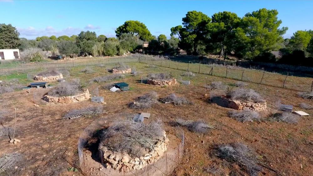El Consell inicia los trámites para crear un nuevo centro cinegético de Mallorca