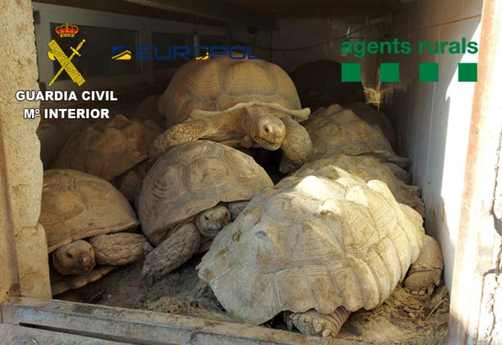 La Guardia Civil desarticula dos grupos criminales que traficaban con especies protegidas