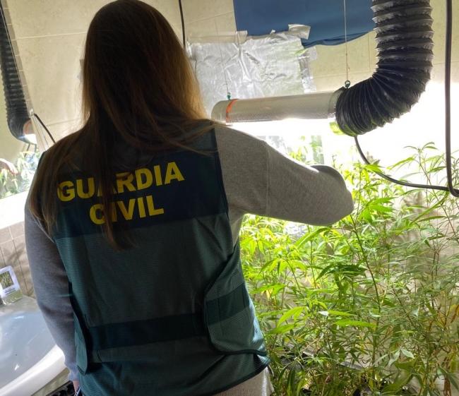 La Guardia Civil de Menorca desmantela una plantación de marihuana en una vivienda ocupada en Mercadal
