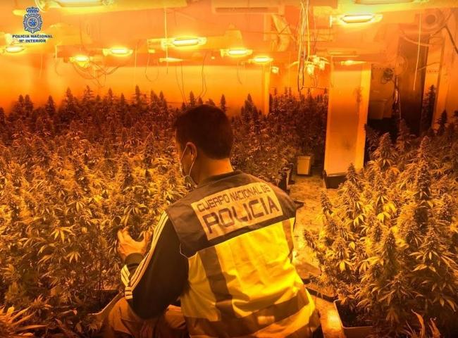 La Policía Nacional desmantela dos plantaciones de marihuana en Palma