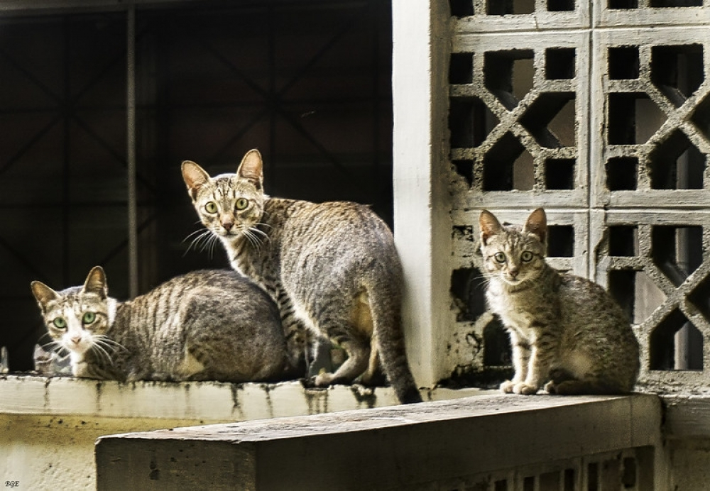 Podemos pide endurecer las penas contra el maltrato animal tras el envenenamiento de 15 gatos en Muro