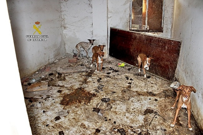 La Guardia Civil interviene en una finca 22 perros en condiciones deplorables y encuentra restos cadavéricos de otros 7