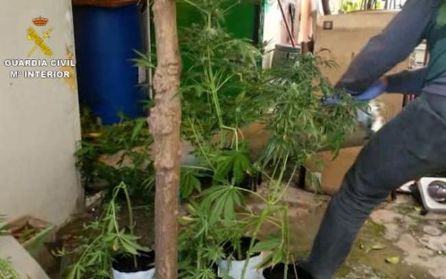 La Guardia Civil desmantela una red dedicada al tráfico internacional de marihuana
