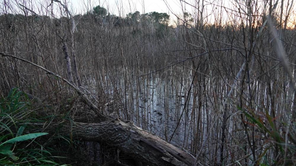 La Agencia Balear del agua recupera una laguna de la depuradora de Ariany