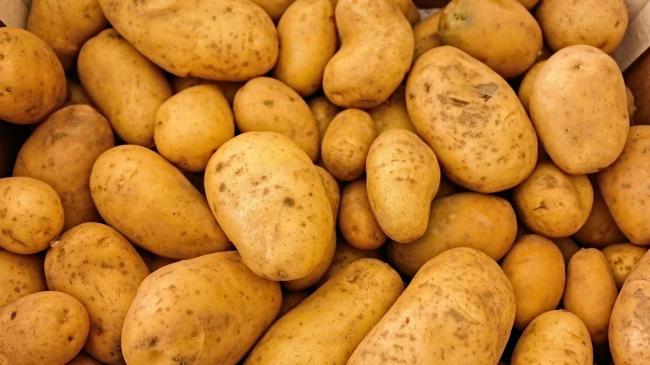 Agricultura trabaja con el Ministerio para garantizar las exportaciones de patata al Reino Unido