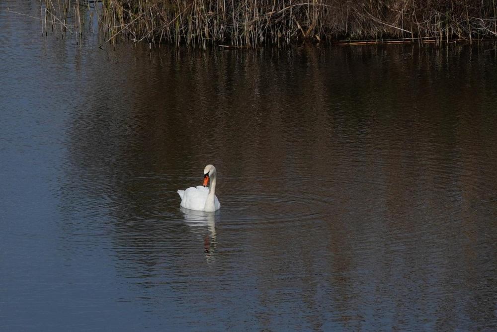Más de 17.000 aves han sido contabilizadas en el censo invernal de los espacios naturales protegidos