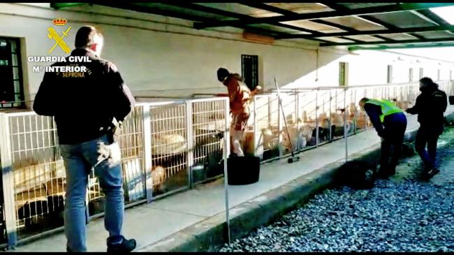 La Guardia Civil detiene al responsable de un criadero perros y a un veterinario por cortarles las cuerdas vocales a los animales
