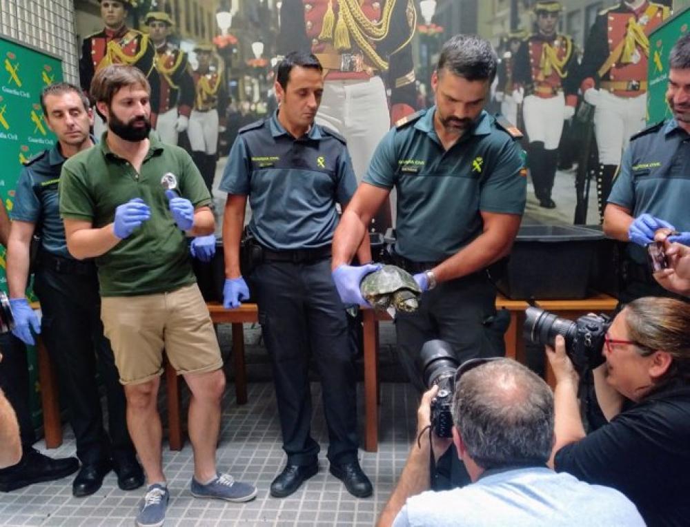 Balears y Canarias pedirán un sistema de control de especies exóticas en los puertos y aeropuertos del Estado