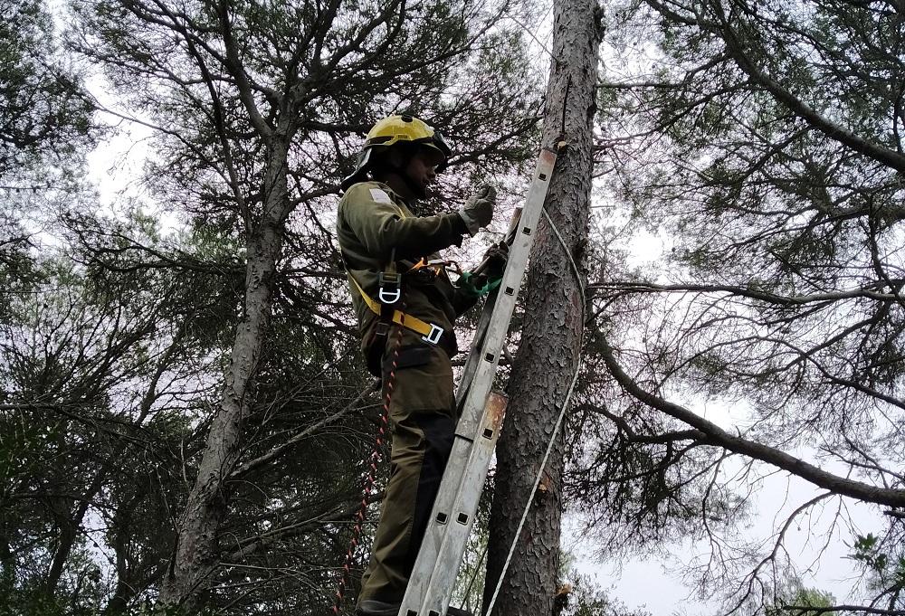 S'Albufera des Grau fomenta el control natural de plagas forestales con la instalación de cajas nidos para murciélagos