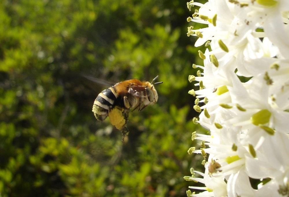 La campaña de invertebrados en las Reservas Naturales de Es Vedrà identifica 43 nuevas especies en los islotes