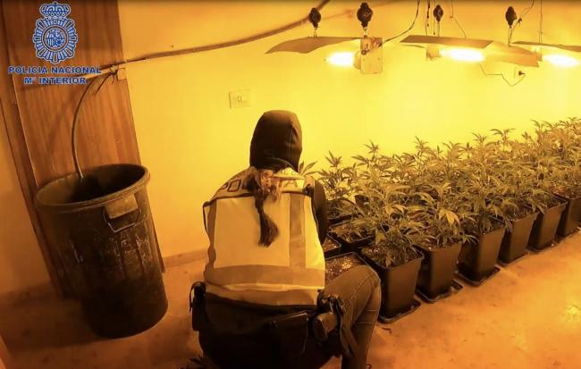 Desmantelan dos puntos de venta y un centro de producción y cultivo de marihuana  en Palma