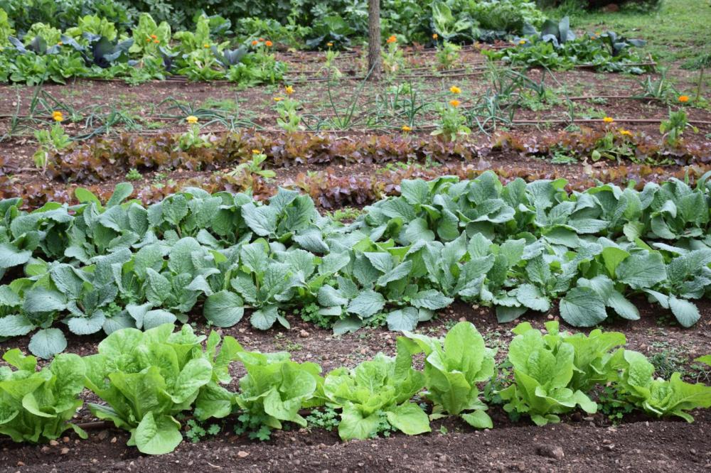 Cooperativas y organizaciones agrarias harán oír su voz en el Parlamento