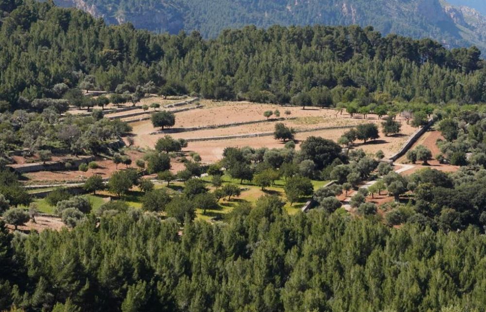 Planícia recupera más de 28 hectáreas para uso agrícola desde que es de titularidad pública