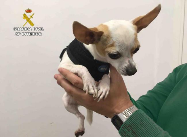La Guardia Civil recupera en Mallorca un can sustraído en la provincia de Barcelona