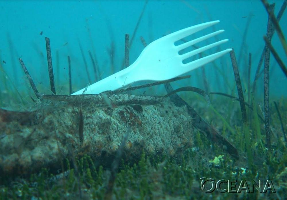 Oceana reclama al Congreso de los Diputados máxima ambición para reducir los plásticos que llegan al mar
