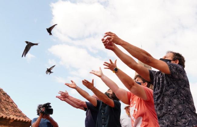 Medi Ambient conmemora la declaración del vencejo como ave del año con la liberación de quince ejemplares