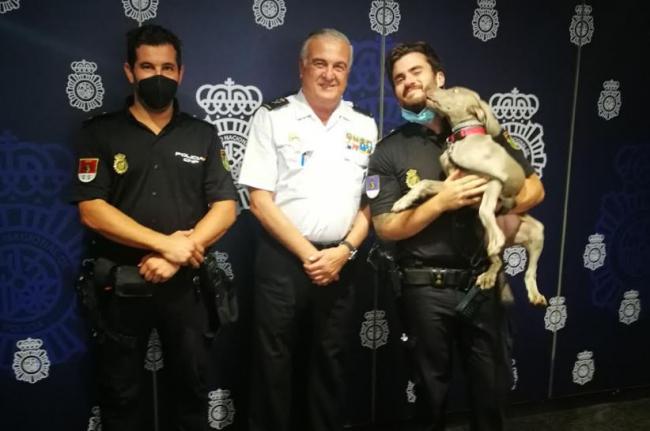 La Policía Nacional de Palma incorpora a su unidad de Guías Caninos una nueva perrita