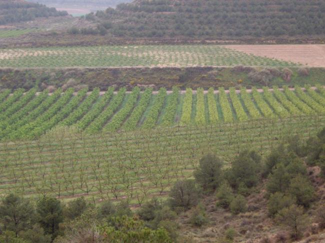 Agricultura adjudica un estudio para determinar el origen de la contaminación por nitratos de las masas de agua subterránea