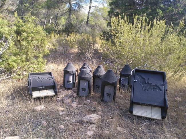 Sanidad forestal incrementa el número de cajas nido para murciélagos en las Pitiusas