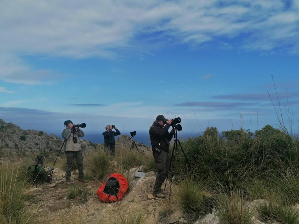Unos setenta voluntarios participan en el nuevo censo de ejemplares de buitre negro en Mallorca