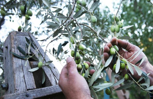 El FOGAIBA abona 3,2 millones de euros en ayudas al sector primario y agroalimentario de Balears